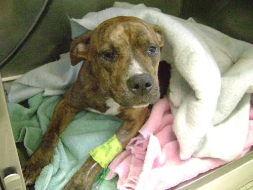 Animal Care and Control recovers two dogs in separate abuse cases